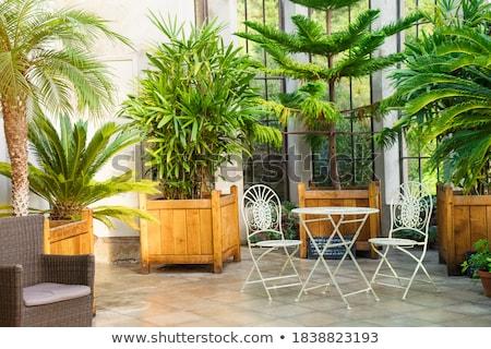 Orangery with tropical trees Stock photo © bezikus