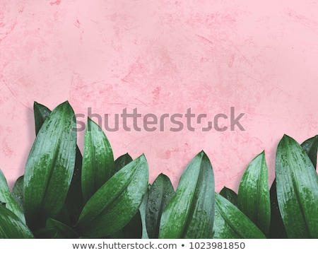Fresh leaves over water background Stock photo © Zela