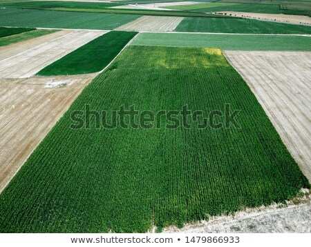 Aerial view of tractor in cultivated corn maize crop field Stock photo © stevanovicigor