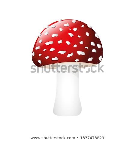 closeup shot of amanita muscaria poisonous mushroom stock photo © nobilior