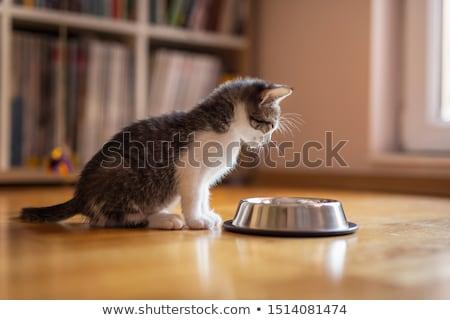 猫 甘い シルエット ストックフォト © djdarkflower