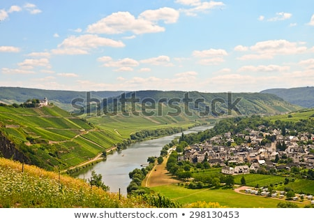 wine harvest, vineyard near Bernkastel, Rheinland Pfalz, Germany Stock photo © phbcz