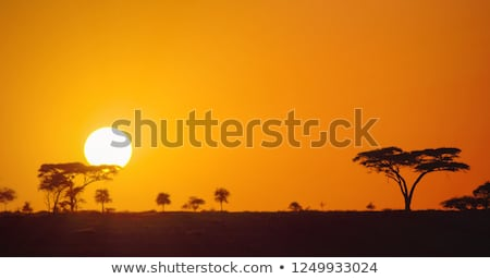 Bush, Tanzania, Africa Stock photo © IS2