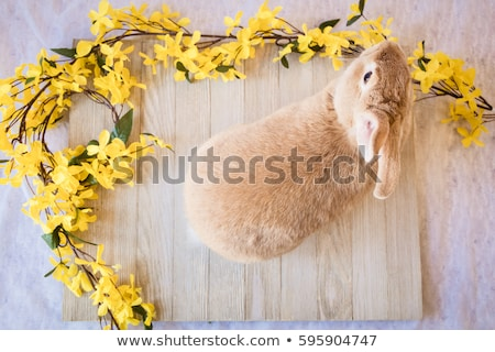 Rabbit on top of a basket of eggs Stock photo © IS2