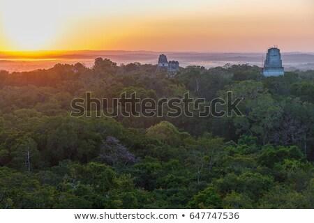 Dzsungel Guatemala fölött park Stock fotó © THP