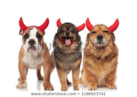 Squadra tre adorabile diavolo cani piedi Foto d'archivio © feedough