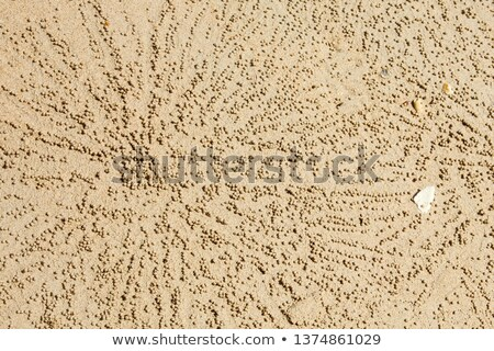Sand Bubbler Crabs on sand seaside in nature. Home of a Ghost crab, sand bubbler crab leave mud ball Stock photo © galitskaya
