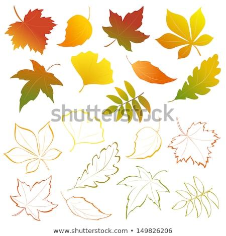 a group of elegant autumn leaves stock photo © blue_daemon