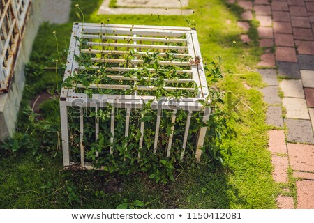Nature in a cage. Ccage with locked plants Stock photo © galitskaya