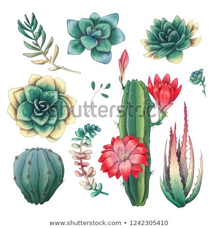 色 砂漠 植物 サボテン セット ヴィンテージ ストックフォト © pikepicture