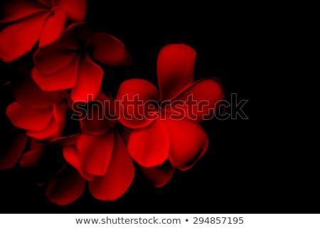vector · tekst · tropische · hibiscus · bloemen · vintage - stockfoto © artspace