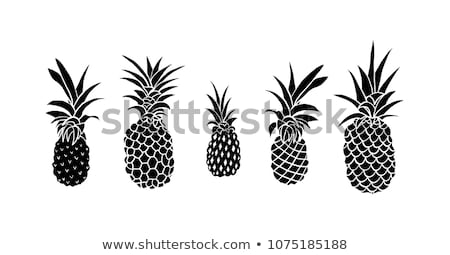 cartoon vector doodles art and design illustration monochrome background stock photo © balabolka