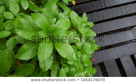 Selected focus empty black wooden table and green garden or fore Stock photo © Freedomz