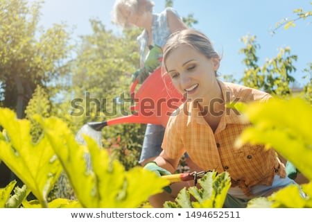 senior woman watering the vegetables while daughter is working in garden stock photo © kzenon