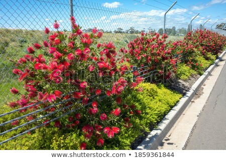 Fence with plant and roadside Stock photo © bluering