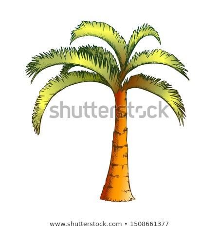 Palm kokosnoot tropische boom inkt vector Stockfoto © pikepicture