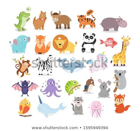 Foto stock: Bonitinho · animal · imagem · leão · tenha · coelho