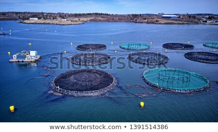 aquaculture stock photo © capturelight