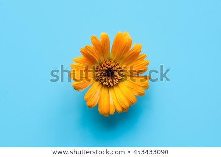 Stock fotó: Egy · narancs · virág · izolált · fehér · közelkép