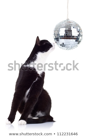 Blanc noir chat regarder grand disco boule disco Photo stock © feedough