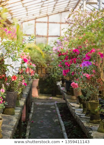 Inside Beautiful Old Greenhouse Stock photo © franky242