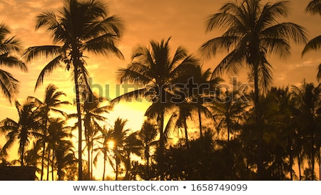 palmiye · gökyüzü · bahçeler · Sri · Lanka - stok fotoğraf © haraldmuc