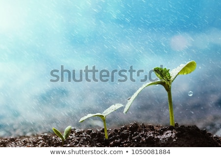 It grows in rain. Stock photo © Fisher