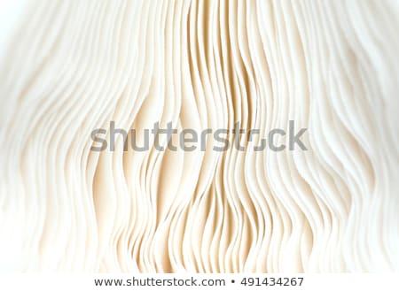 Closeup of the underside of a mushroom cap Stock photo © sarahdoow