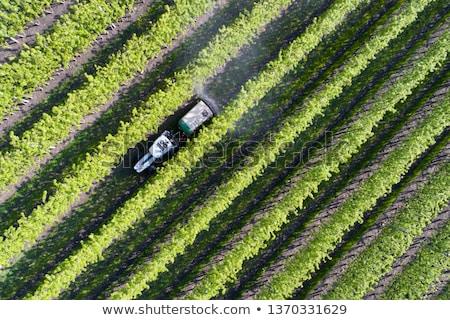 Cultivado mosaico terra campo Foto stock © EcoPic