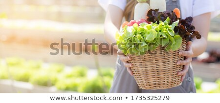 Young happy woman harvests in the greenhouse Stock photo © travnikovstudio