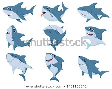 cute · rekina · ilustracja · cartoon · zwierząt · pływanie - zdjęcia stock © lenm