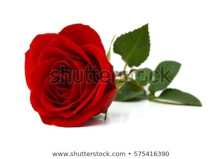 piros · rózsa · fehér · virág · rózsa · zöld · ajándék - stock fotó © shutswis