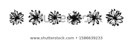 Hand drawn Daisy Set Vector Stock photo © burakowski