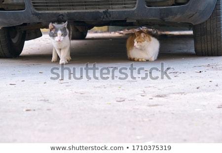 Kat auto warmte dag straat Stockfoto © meinzahn