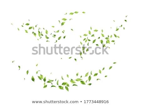 зеленый движения аннотация круга вектора версия Сток-фото © vlastas