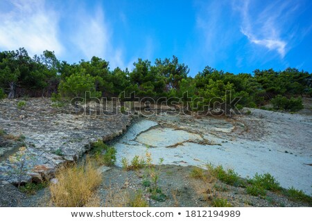 Beauty of Earth - to the sky. Tree growing on a rock. Stock photo © bogumil