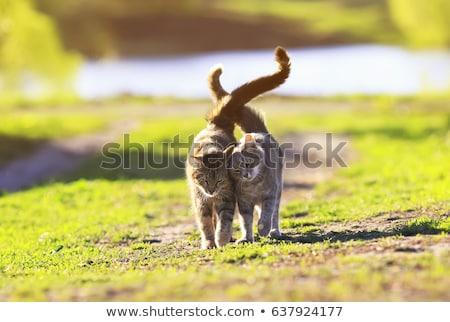 ходьбе · котенка · один · месяц · возраст · мелкий - Сток-фото © bmonteny