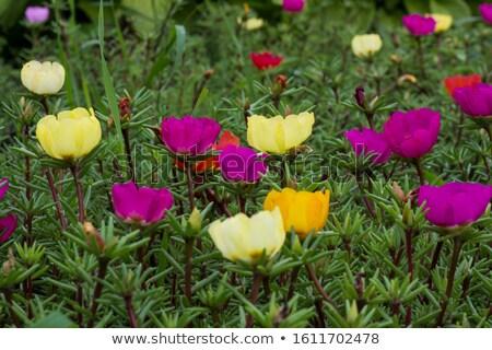 мало природы саду красоту завода Сток-фото © sweetcrisis