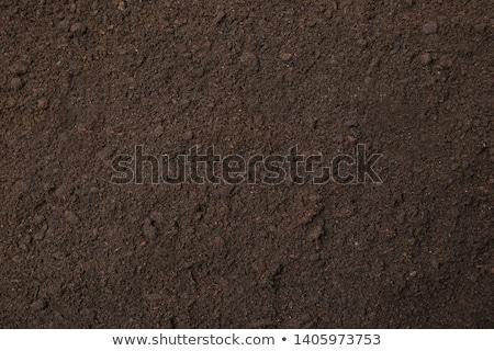 dry terrain brown soil natural background stock photo © anterovium