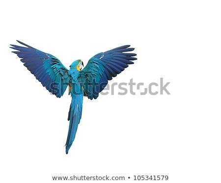 Stok fotoğraf: Mavi · altın · renkli · kuşlar · yalıtılmış · beyaz