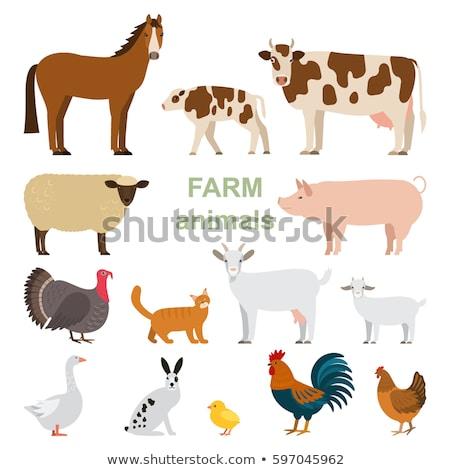 Foto stock: Vetor · cômico · animais · de · fazenda · silhuetas · coleção