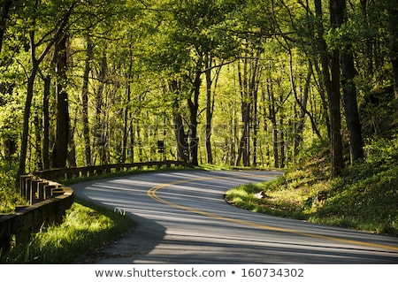 country road on early morning stock photo © mps197