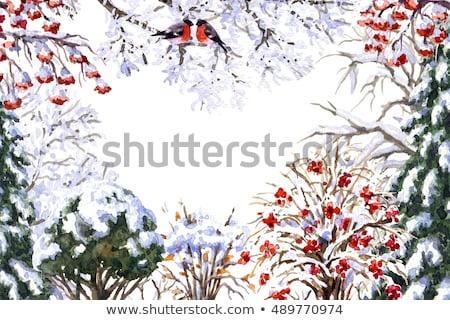 bird sitting on a snow-covered branch. Stock photo © marunga