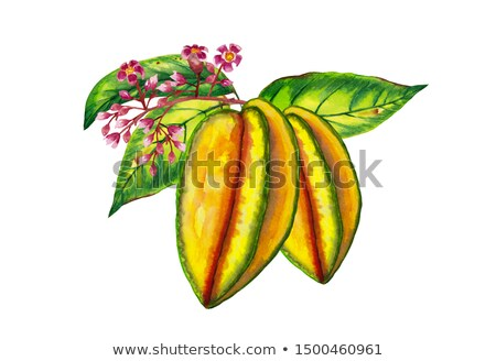 carambola in water Stock photo © Rob_Stark