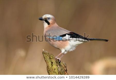 Stock fotó: Nedves · eső · madár · Európa · közelkép · barna