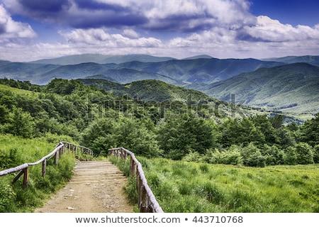 Bergen top park gras bos natuur Stockfoto © wime