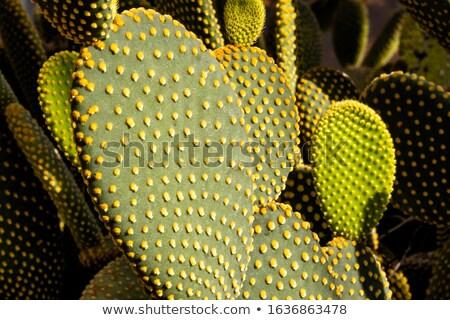 Illustrazione impianto disegno cactus vettore immagine Foto d'archivio © bluering
