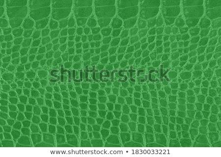 Сток-фото: зеленый · змеи · спальный · Cartoon · иллюстрация