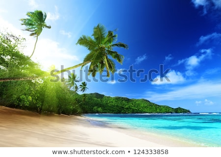 Gün batımı zaman plaj hindistan cevizi ağaçlar su Stok fotoğraf © bank215