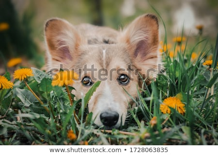 Stockfoto: Portret · aanbiddelijk · gemengd · ras · hond · opknoping